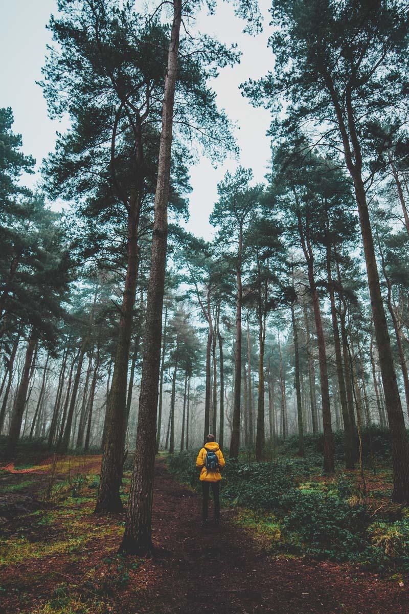 Mann mit gelber Jacke im Wald.