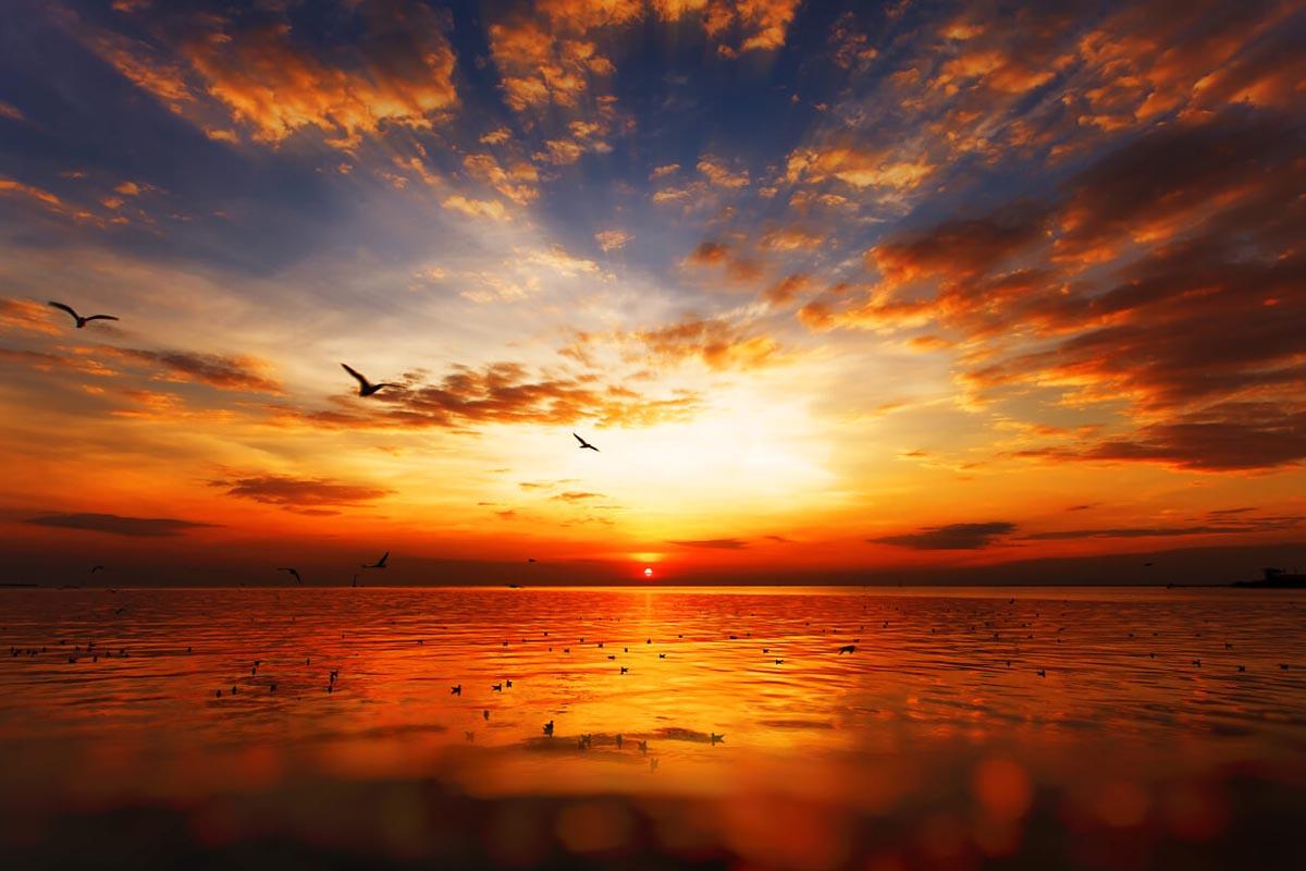 Vögel fliegen im Sonnenuntergang über dem Meer. Die Sonnenstrahlen zeichnen sich deutlich ab.