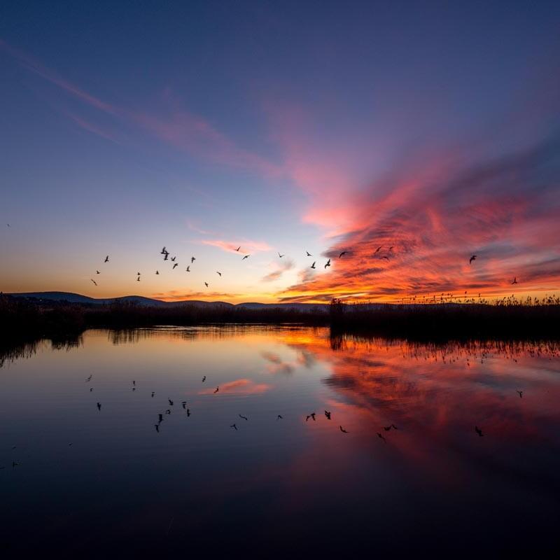 Ein vom Sonnenuntergang in Rottöne gefärbtes Wolkenband zieht über einen See hinweg. Vögel fliegen durch die Luft und spiegeln sich auf der glatten Wasseroberfläche.