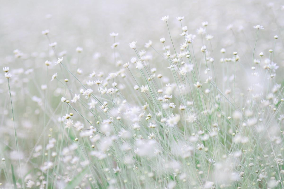 Blumenwiese mit Tiefenunschärfe.