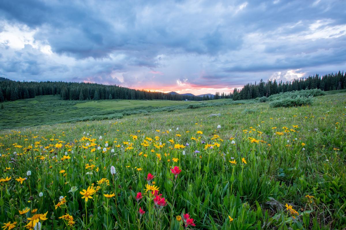 Blumenwiese mit Sonnenuntergang