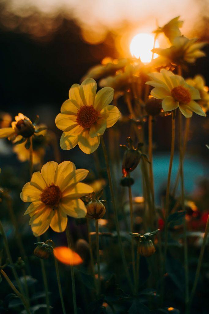 Makroaufnahme einer Blumenwiese eingefangen bei Sonnenuntergang