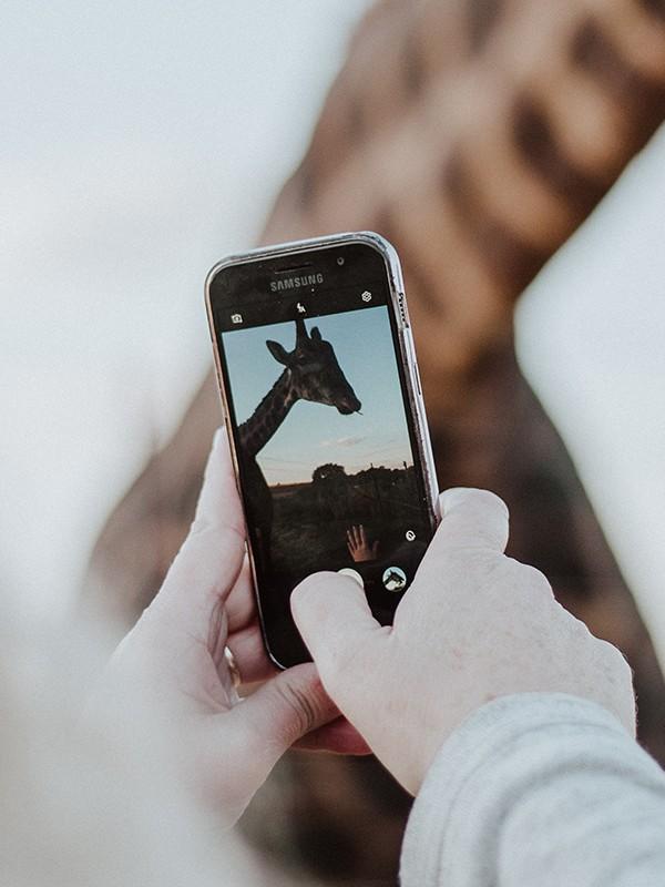 Smartphonefoto von einer Giraffe.