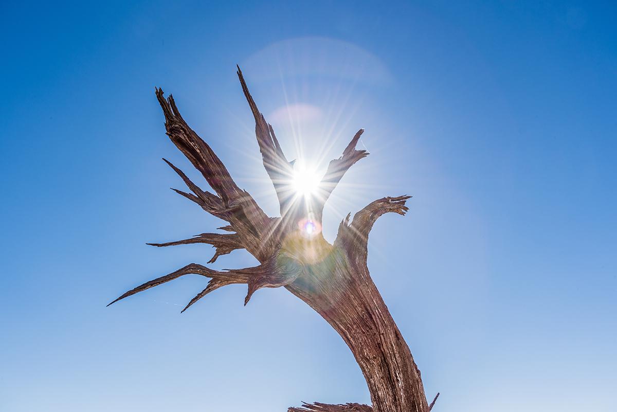 Baum im Gegenlicht, mit Lensflare.