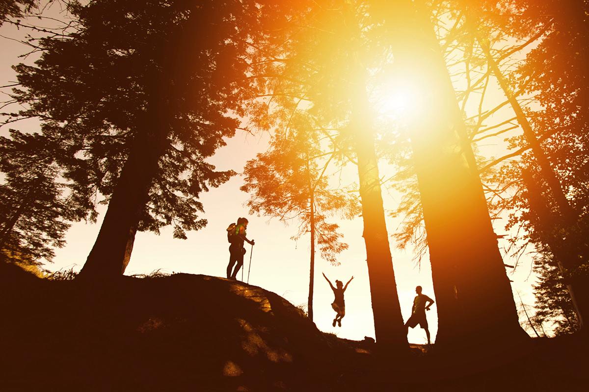 Menschen im Wald vor Gegenlicht.