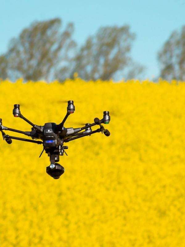 Drohne über Rapsfeld