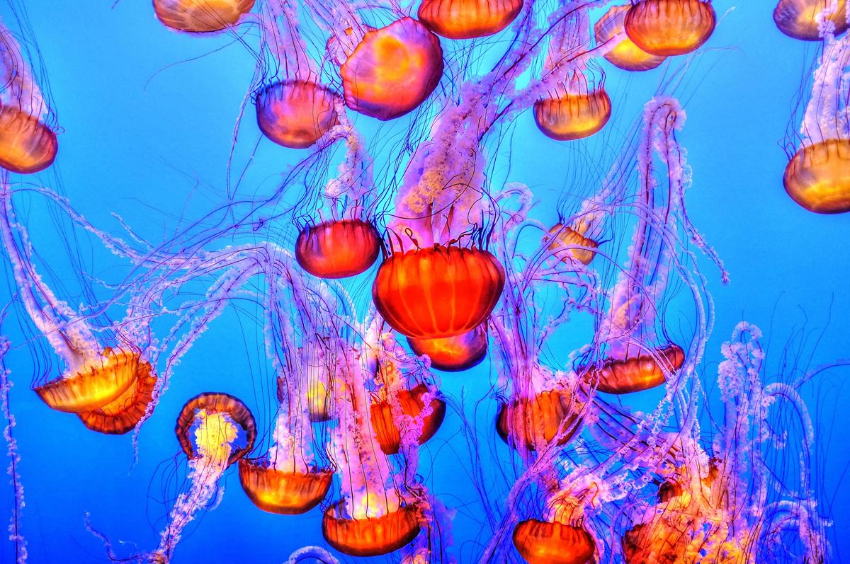 Leuchtende Quallen im Meer.