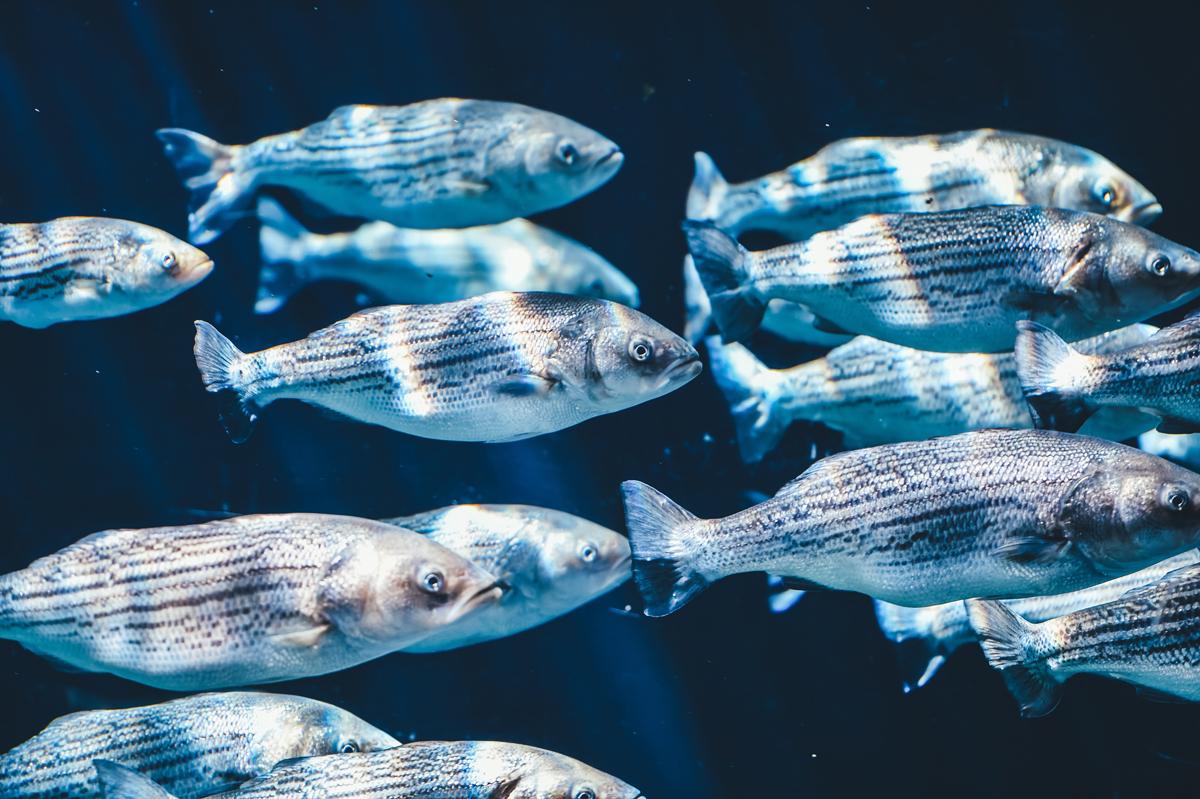 Fischschwarm im tiefen Meer