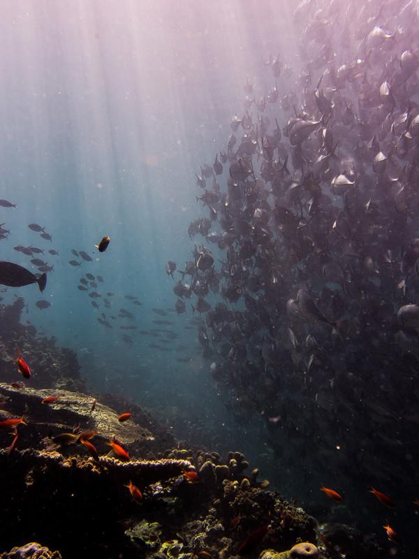 Korallenriff und Fischschwarm