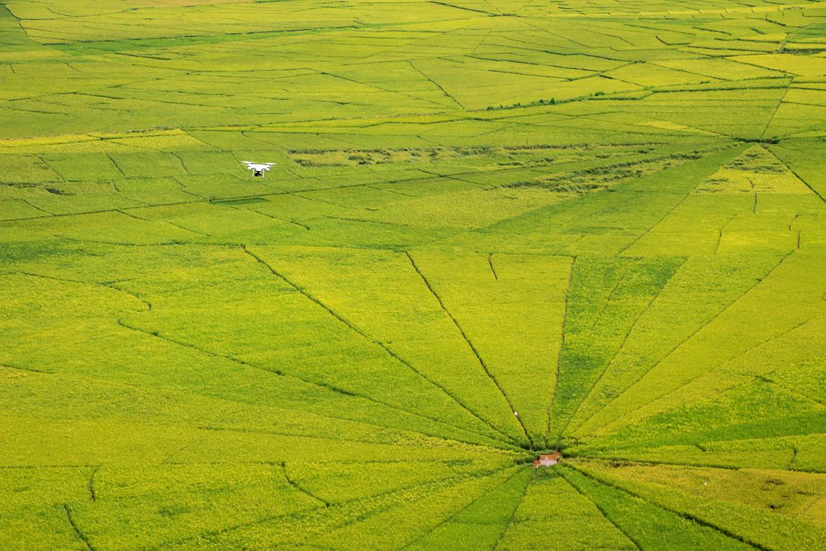 Drohne über Reisfeld in Indonesien