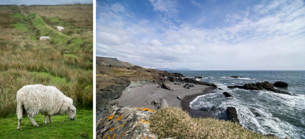 Bildergalerie: Ein Schaf grast auf dem ersten Bild auf einer Weide. Auf dem zweiten Bild sieht man einen Strand mit wilden Wellen.