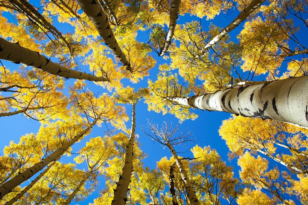 Laubbäume von unten fotografiert