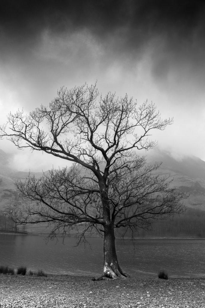 Der knorrige Baum hat einen wunderbar düsteren Effekt in der tristen Landschaft. Die Schwarz-weiß-Fotografie unterstützt diesen zusätzlich.