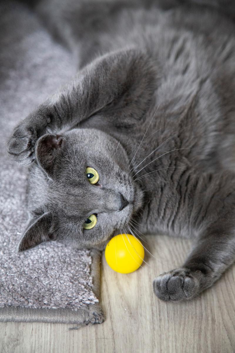 Katze spielt mit gelben Ball Spielzeug