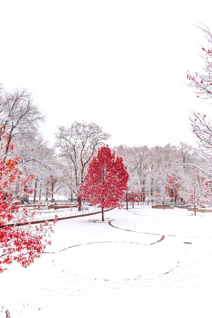 Roter Baum in Schneelandschaft