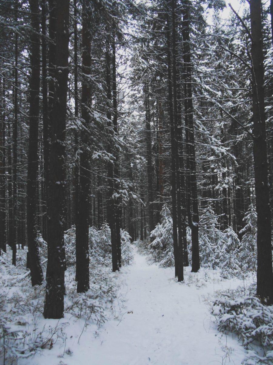 Dunkler Wald mit Schnee