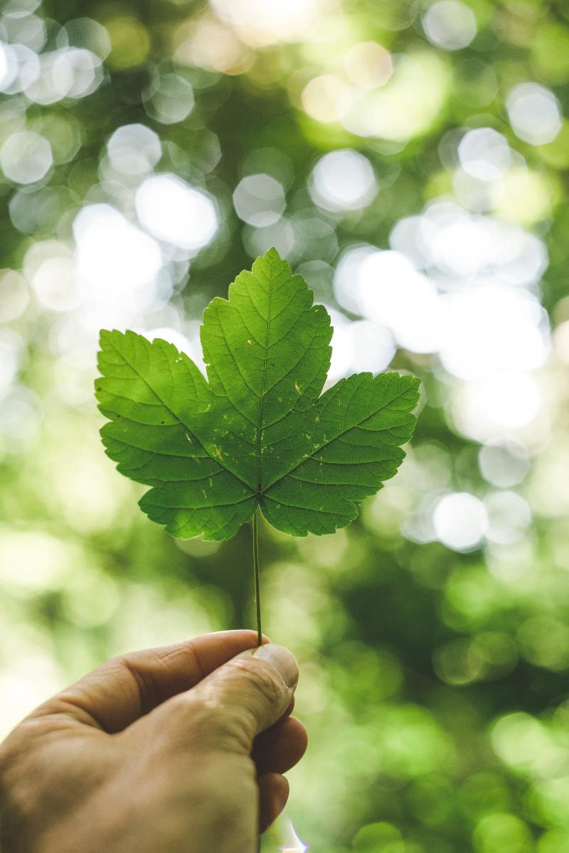 Scharfe Nahaufnahme eines Baumblattes