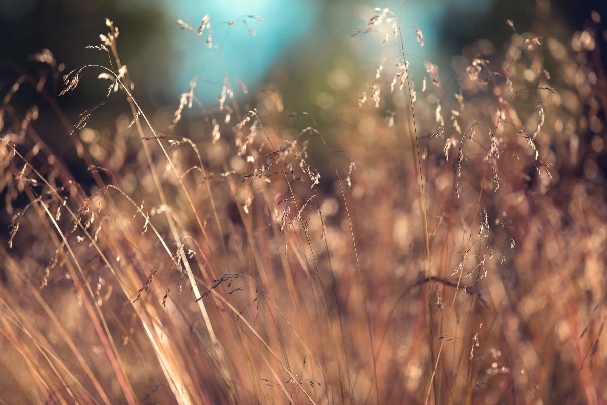 Scharfe Nahaufnahme von Gräsern auf einem Feld