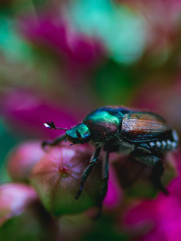Makroaufnahme eines Käfer auf einer Pflanze mit unscharfem Hintegrund
