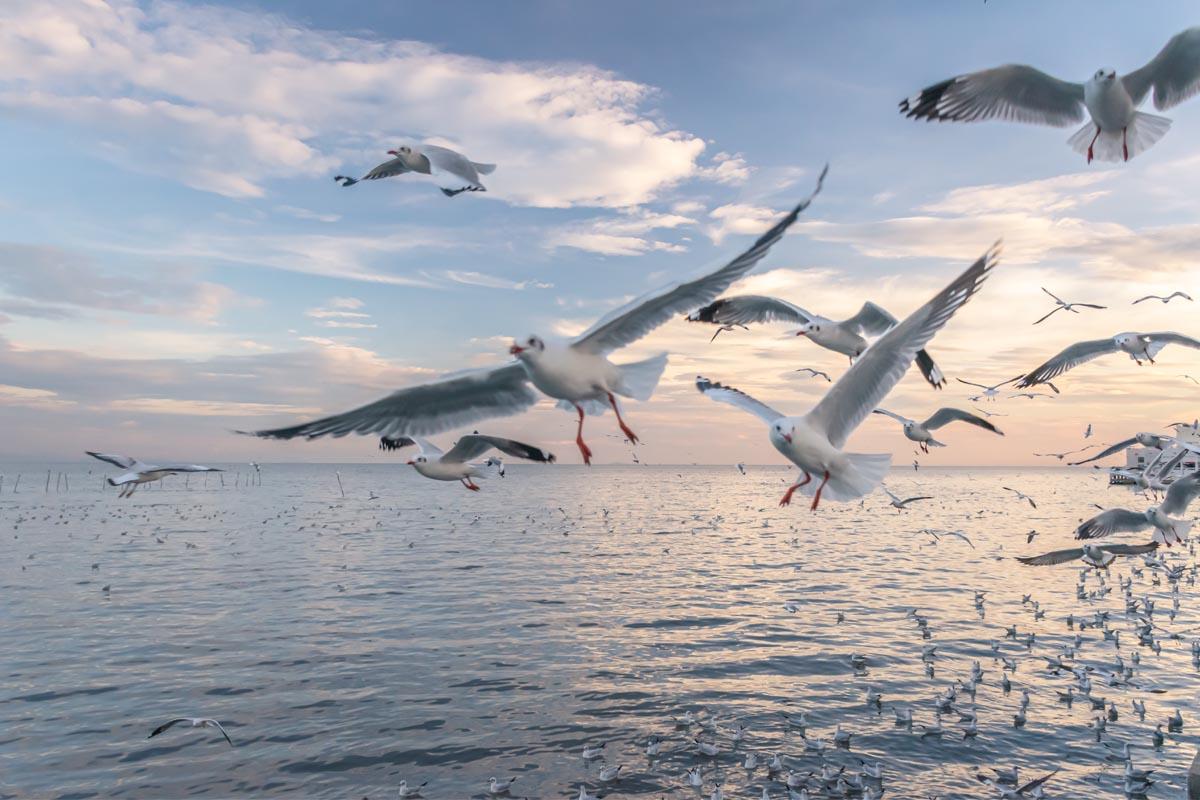 Möven fliegen aufgescheucht übers Meer