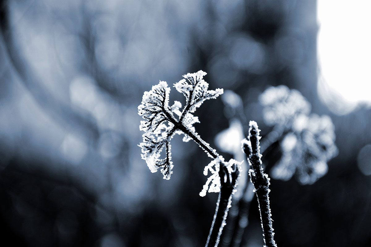 Gartenfotos im Winter gefrorene Pflanzen