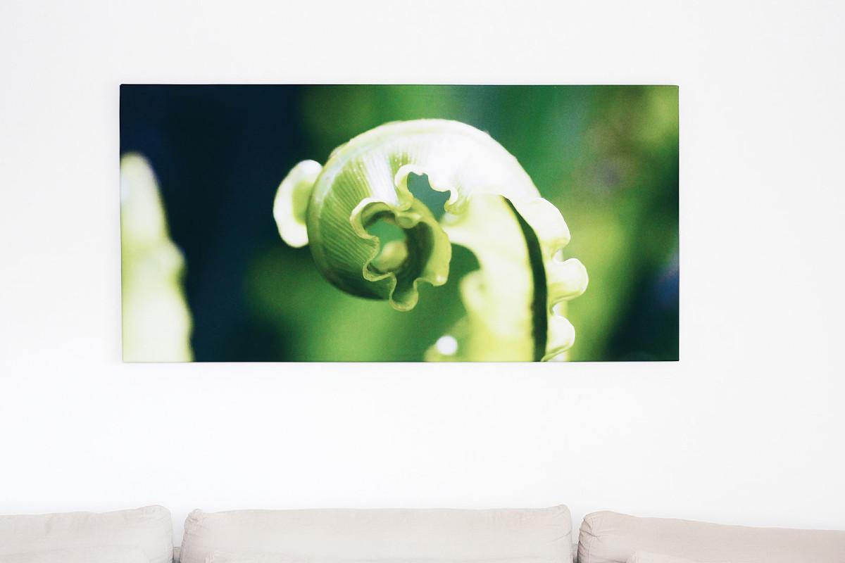 Makrofotos eines Farnblatts auf einer Leinwand