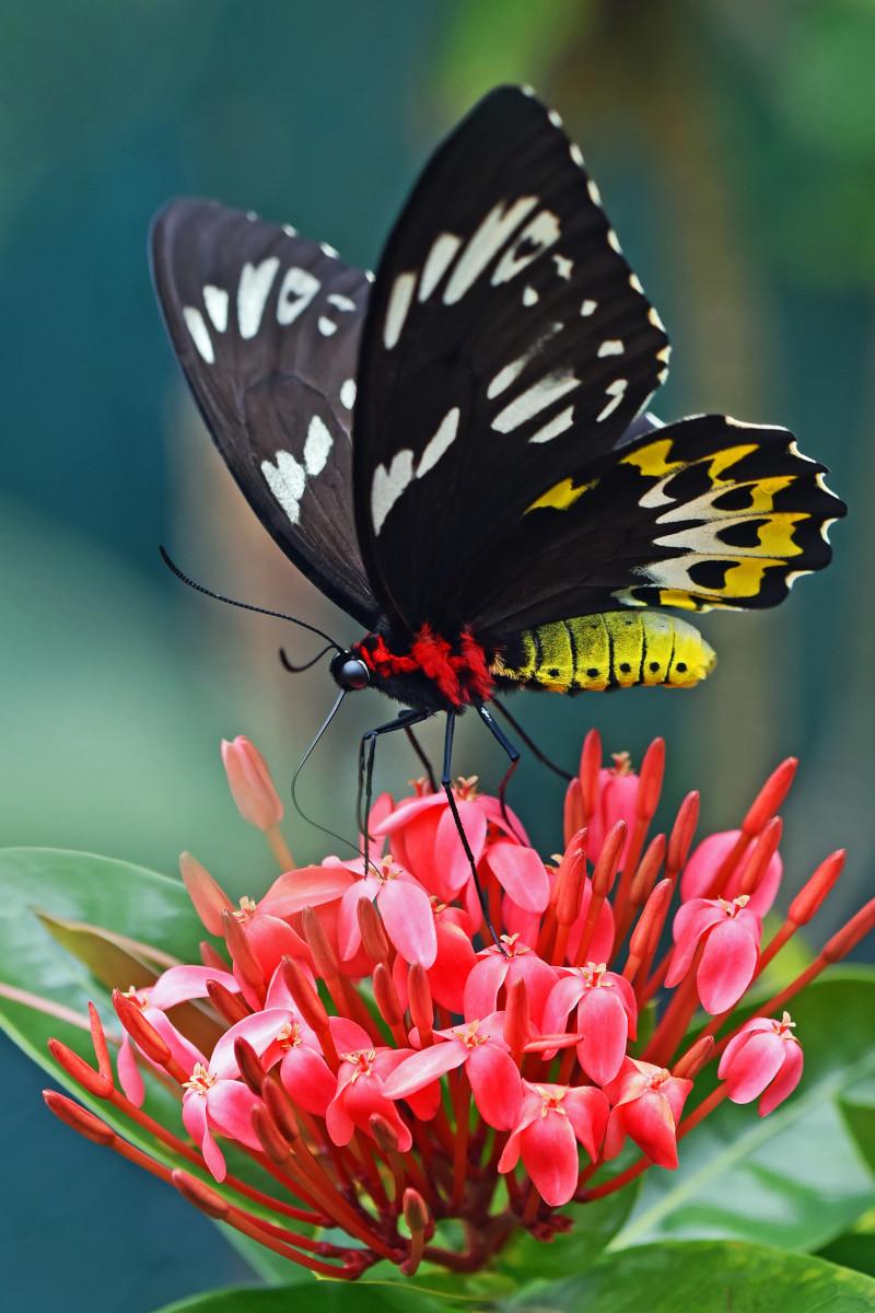 Makrofoto eines Schmetterlings auf einer Blume