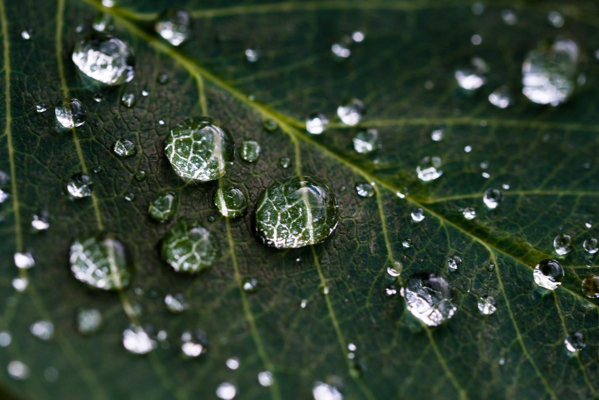 Makrofoto von Wassertropfen auf einem Blatt