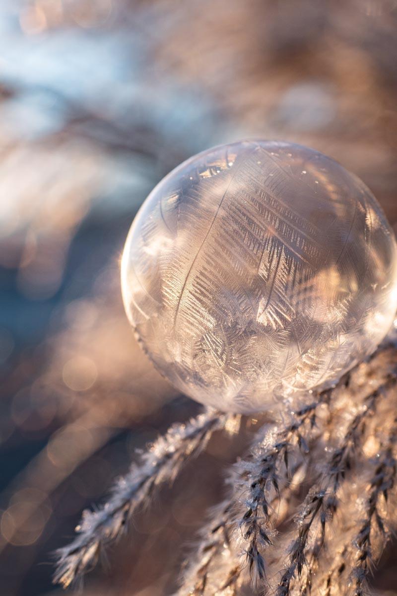 Makroaufnahme einer gefrorenen Seifenblase auf Gräsern bei Sonnenlicht